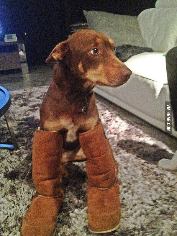My dog really loves my boots.