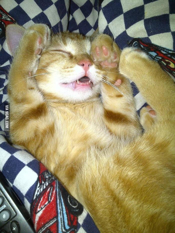 How my cat sleeps