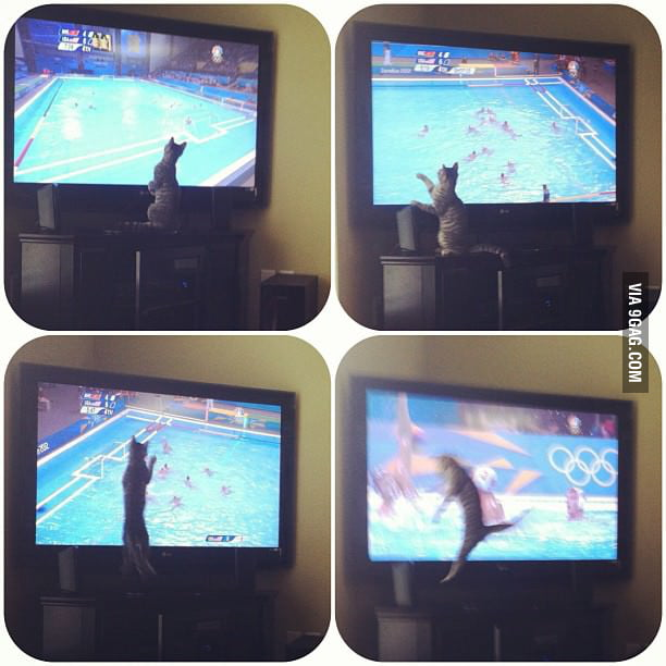 My friend's cat watching Olympic Water Polo