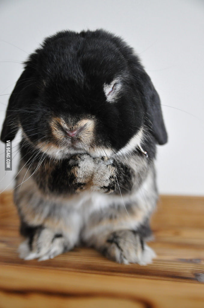 Praying Rabbit: Lord, please forgive me.