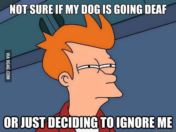 As my dog gets older...