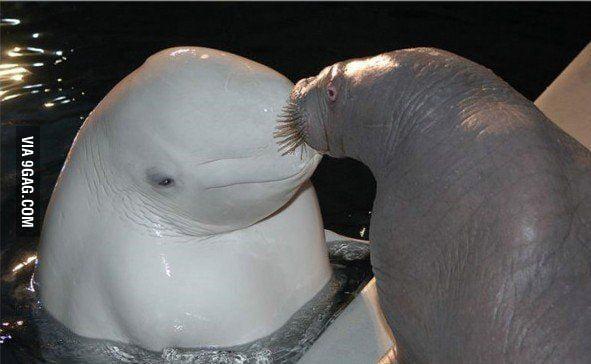 Kiss you!
