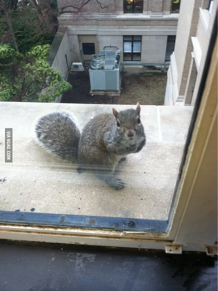 Saw a squirrel outside the window