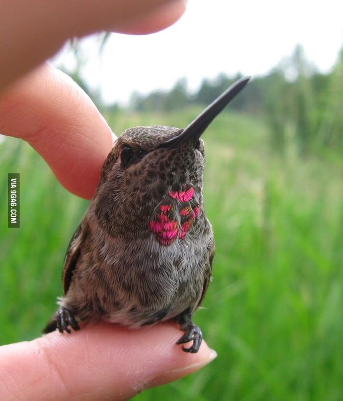 Photogenic Hummingbird