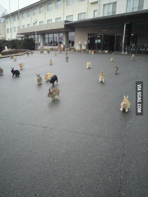 The Planet of the Bunnies