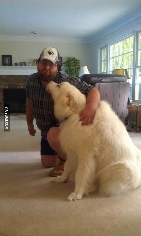 My friend has a dog which is like a polar bear...