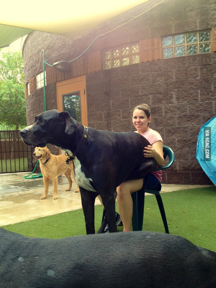 She firmly believes she's a lap dog...