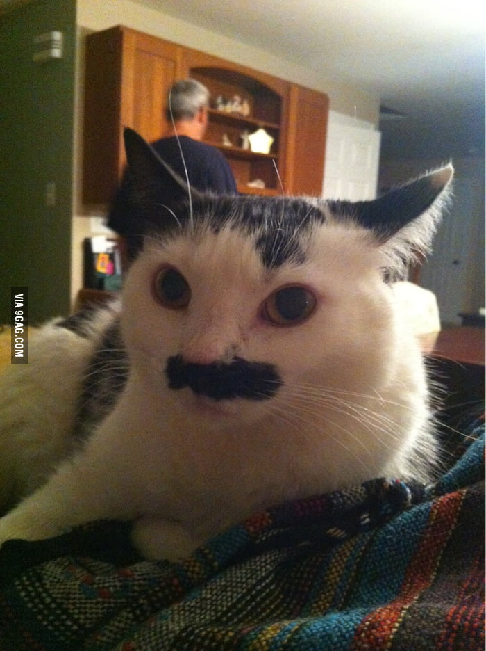 My friend's cat, Mustasche.
