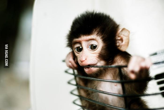 Cute baby monkey in basket!