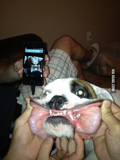 Predator disguised as a dog