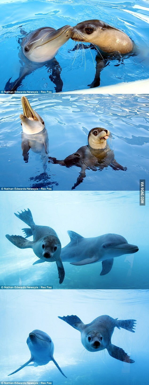 This dolphin and this seal are BFF