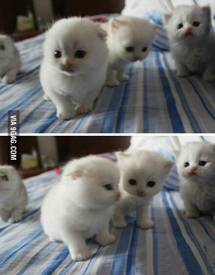 Just some kittens