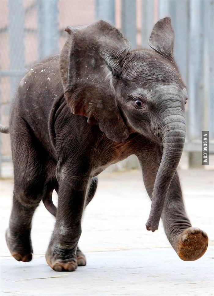 Run, Elephant, Run!