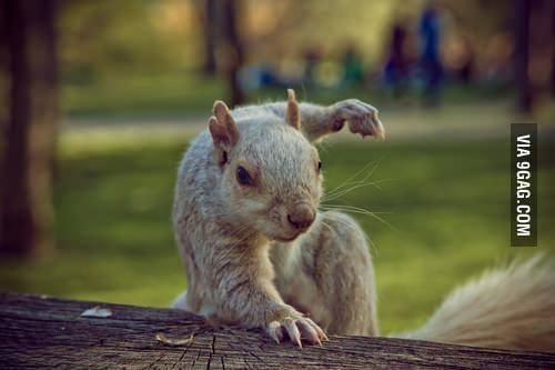 I'm NinjaSquirrel!