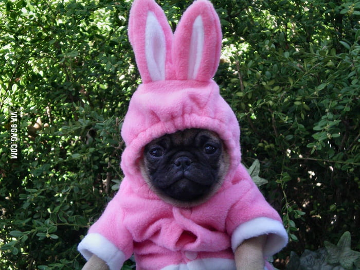 Bunny puppy is not amused.