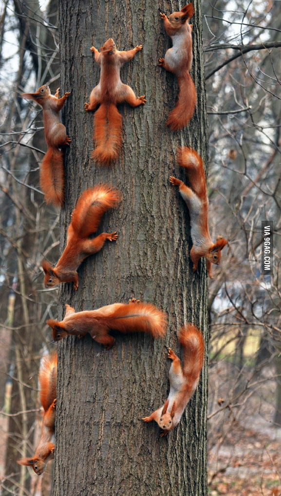 Squirrels. Squirrels everywhere.