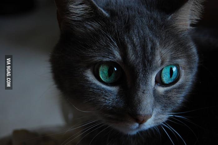The mesmerizing eyes of a feline