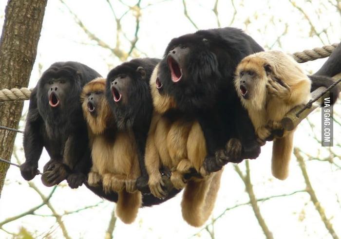 Monkey Choir
