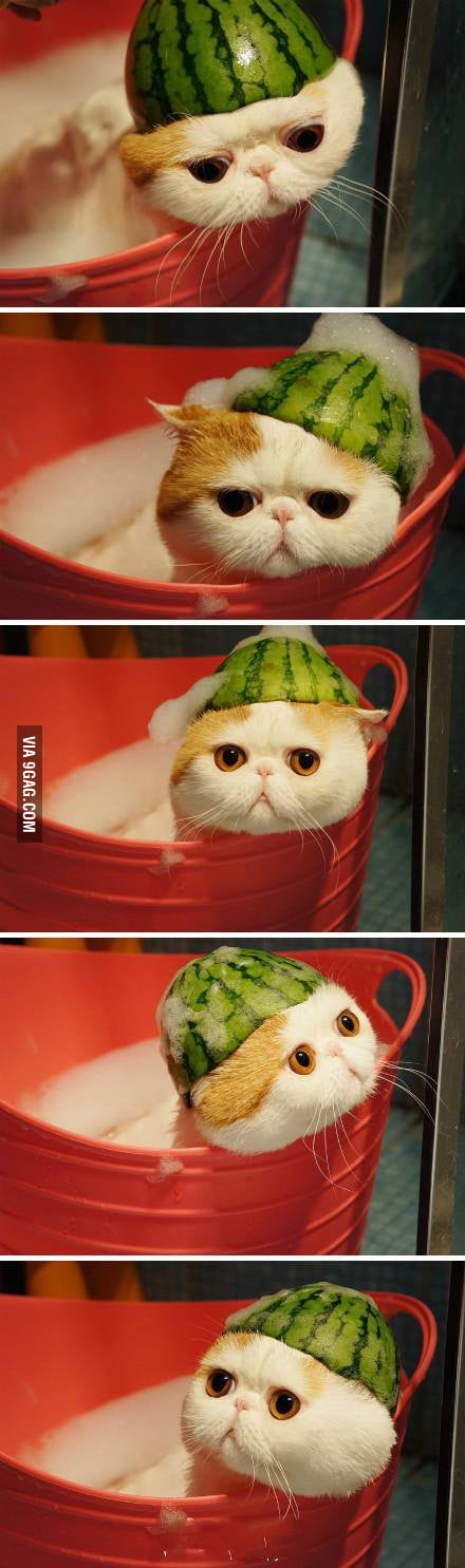 Melonhead taking a bath.