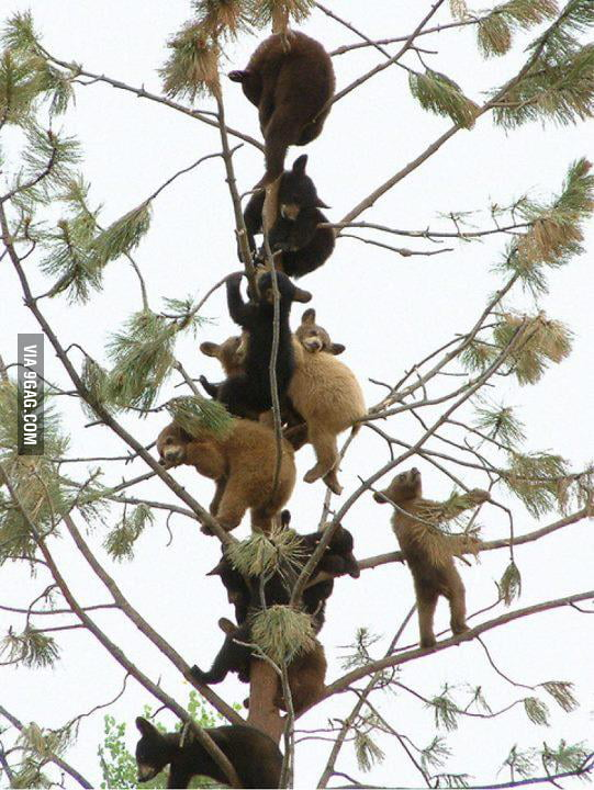 Just some bears in a tree