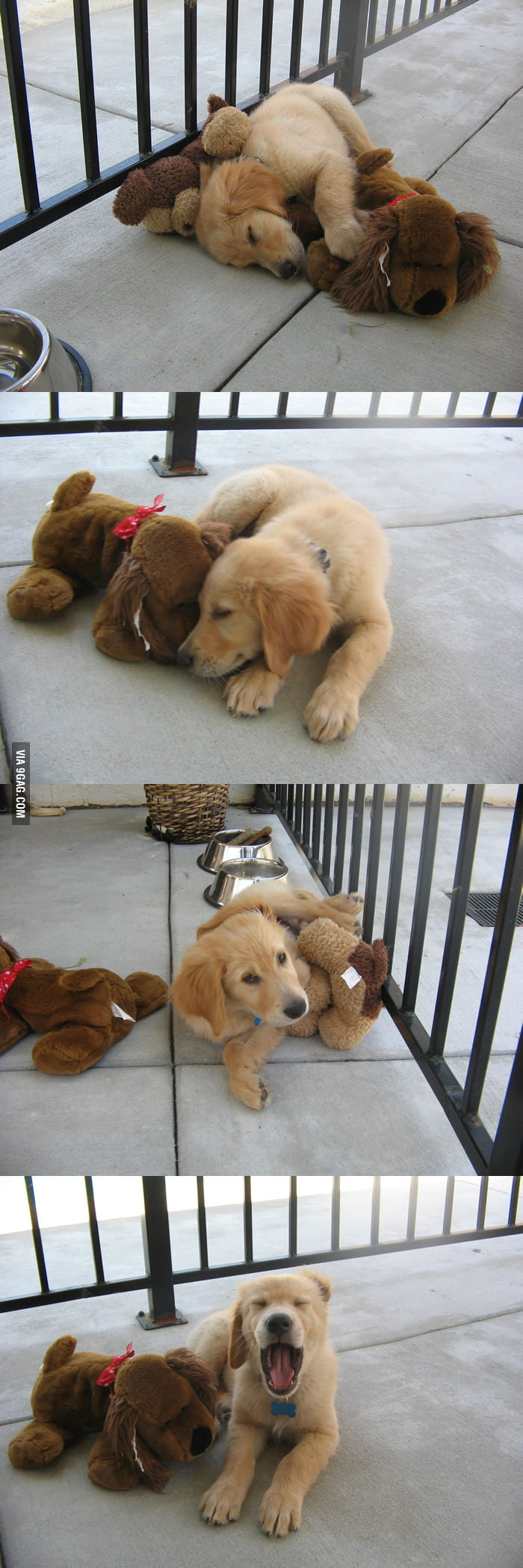 Golden puppy and his best friend.