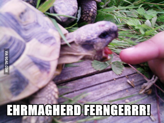 Hungry tortoise is hungry