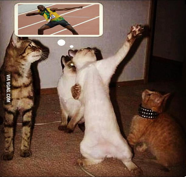 Usain Bolt's cat