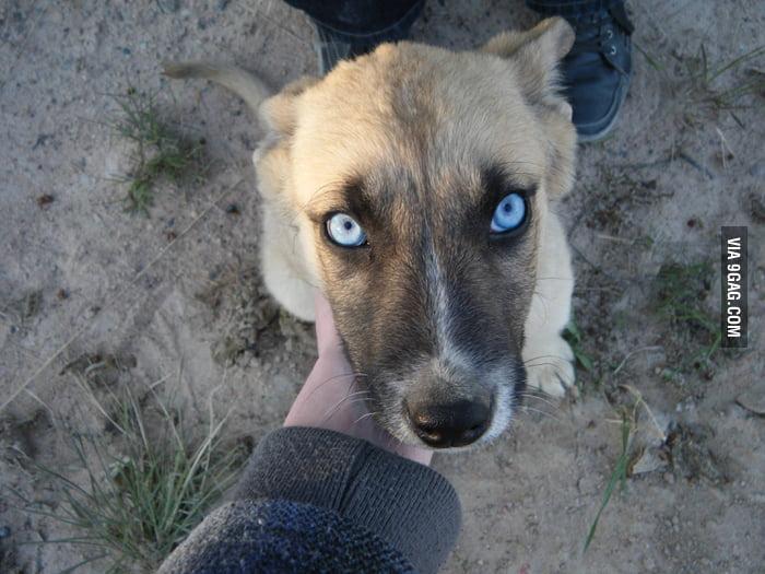Scary eyes...