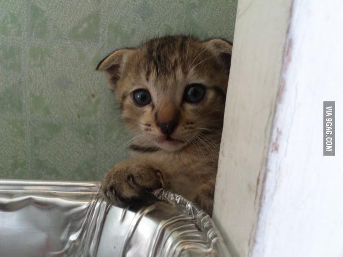 He is a shy cat.
