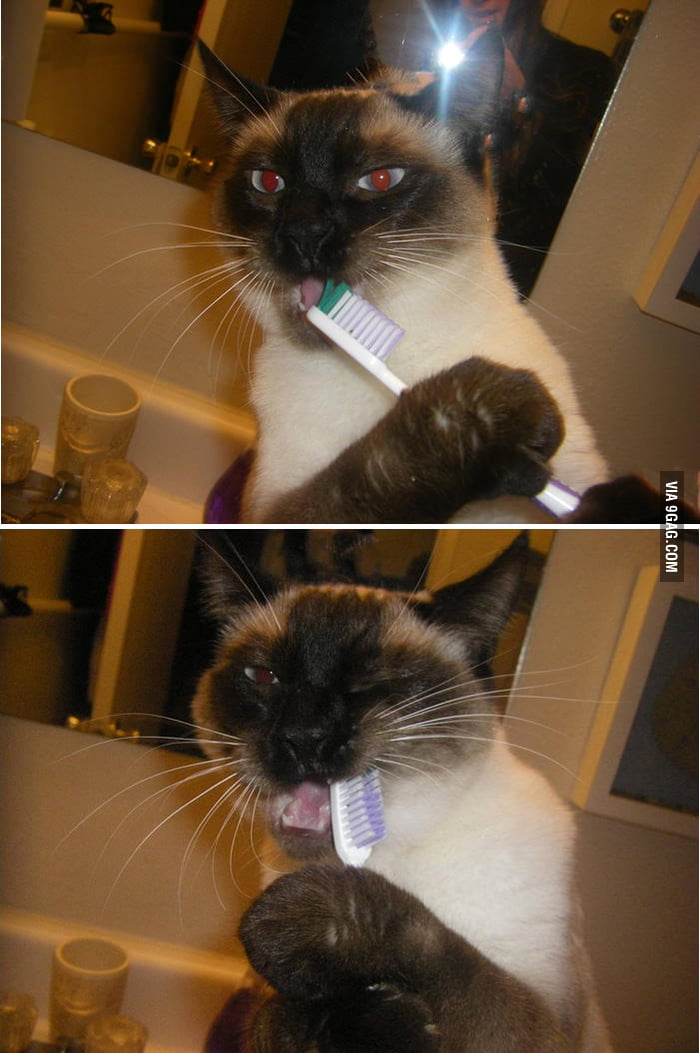 At least she cares about her oral hygiene
