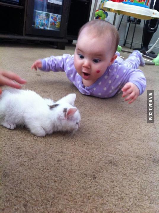 Hey cats!