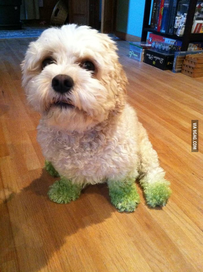 Dog after mowing the lawn