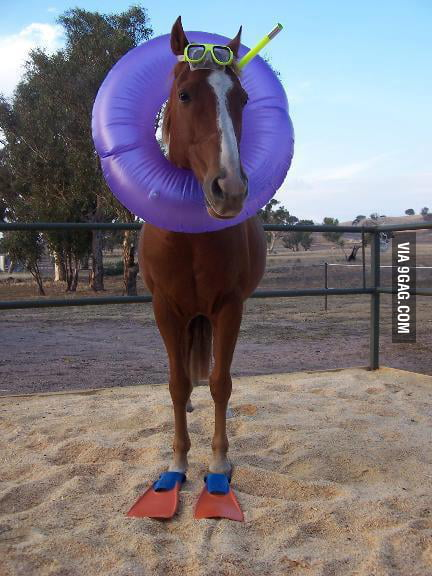 Mom, mom, its a sea horse.