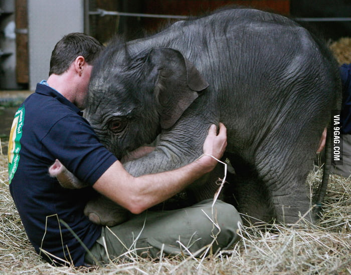 Baby elephant greets her keeper