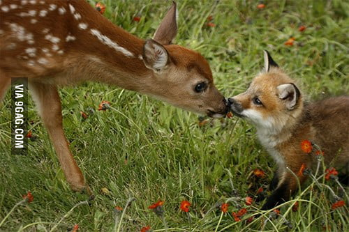 Soul crushing cuteness!