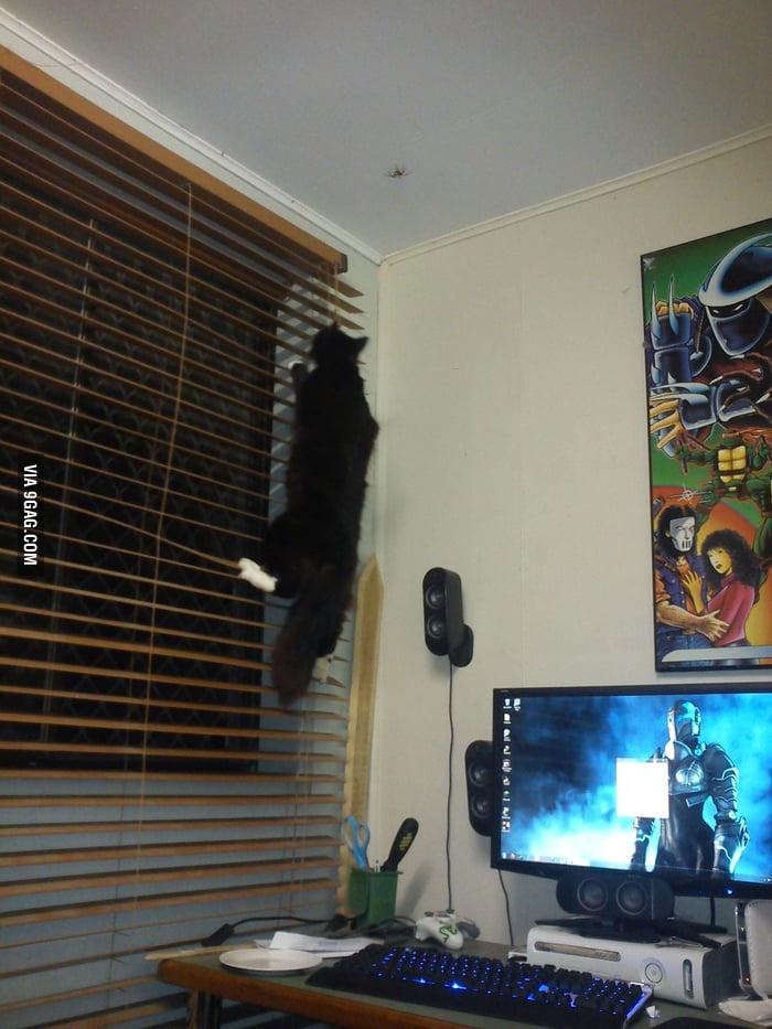 Cat, spider, determination.