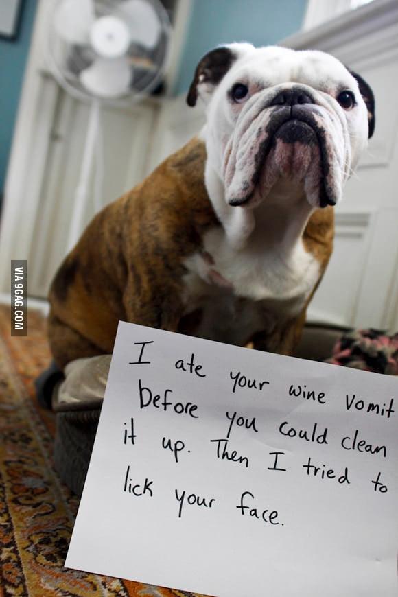 I'm a bad dog...