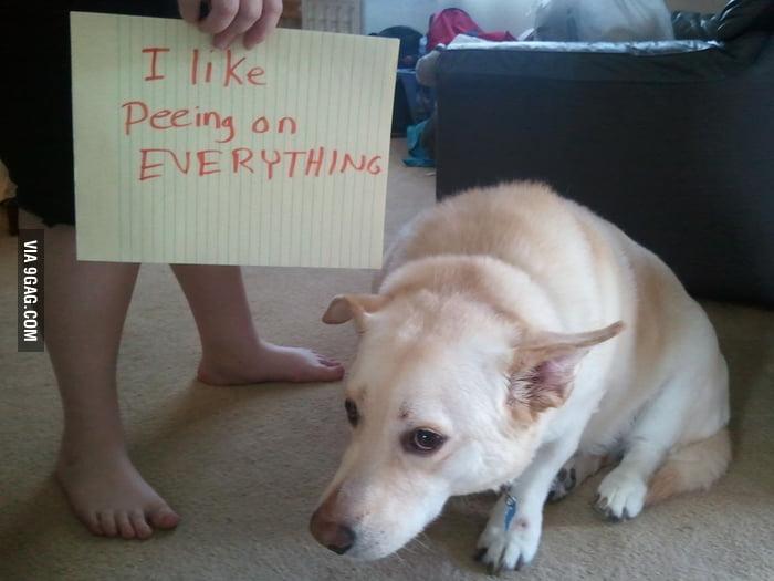 I like peeing on everything.