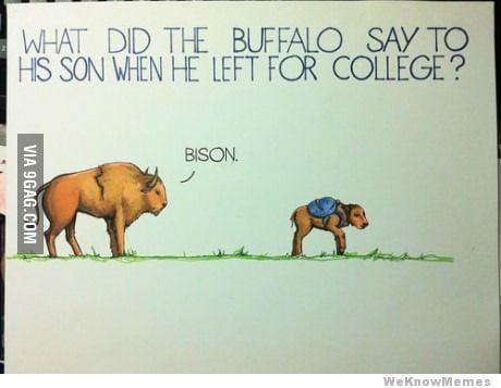 The Best Joke.