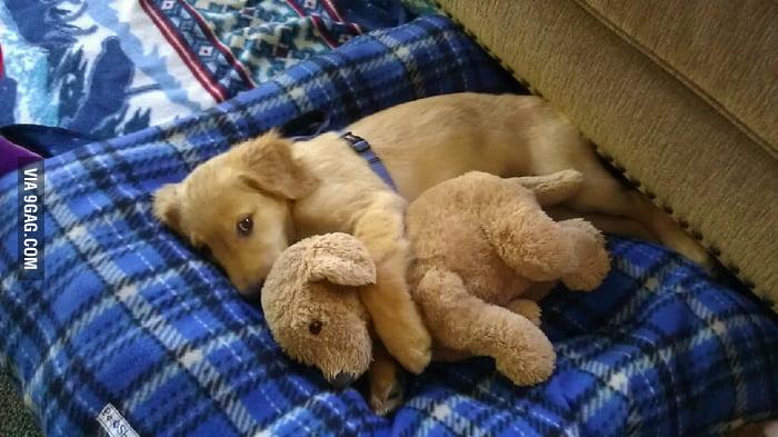 So...much...cuteness