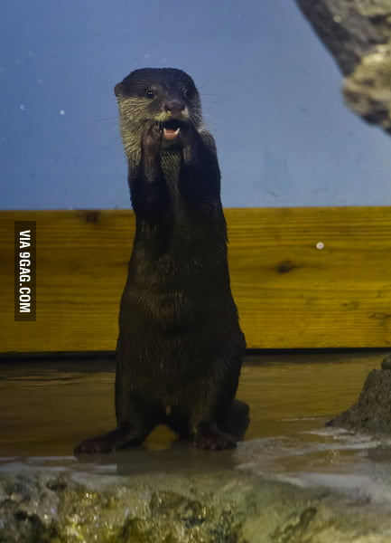 Otterly Shocked