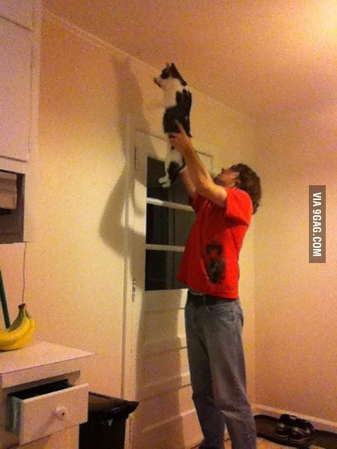 How bachelors kill moths