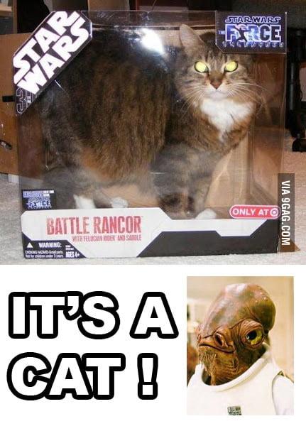 It's a cat!
