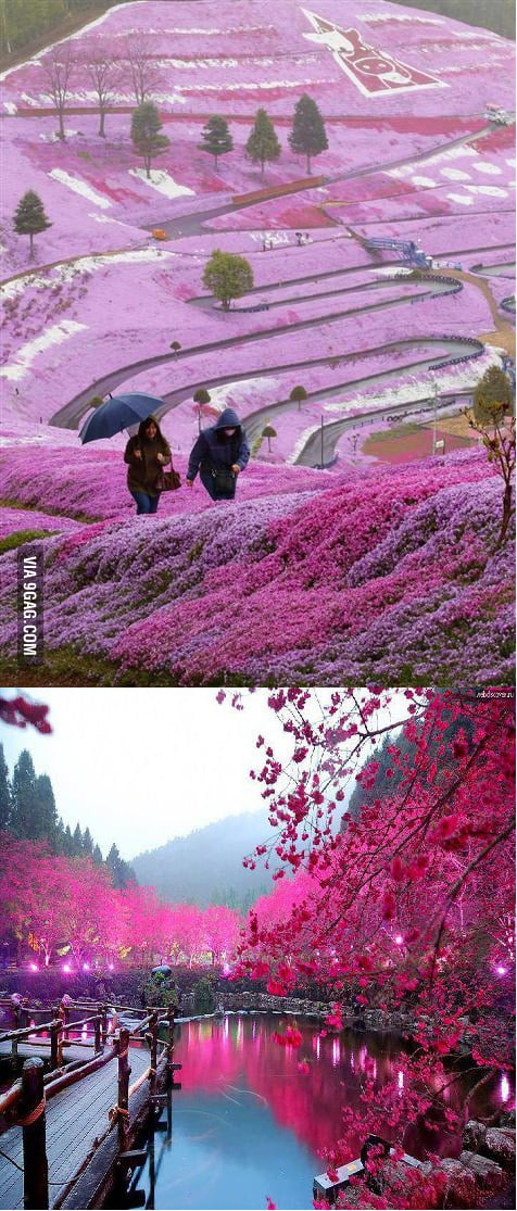 Only in Japan..Who wants to come ?