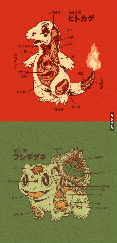 Charmander and Bulbasaur Anatomy