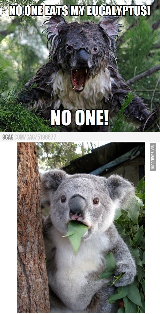 My first thought to angry koala.