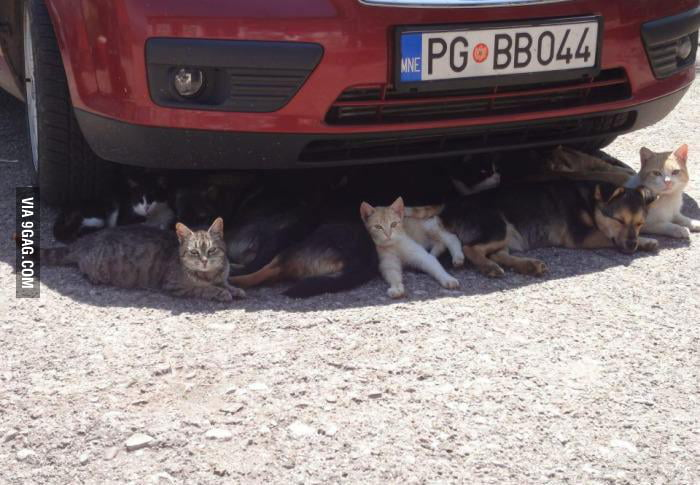 Meanwhile in Montenegro