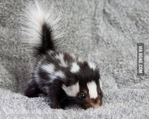 NOW tell me you don't like skunks