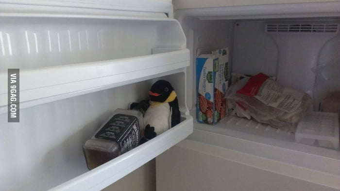The perfect spot for a drunk penguin