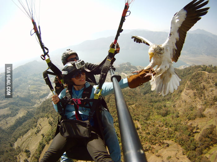 One of the most badass activities: Parahawking